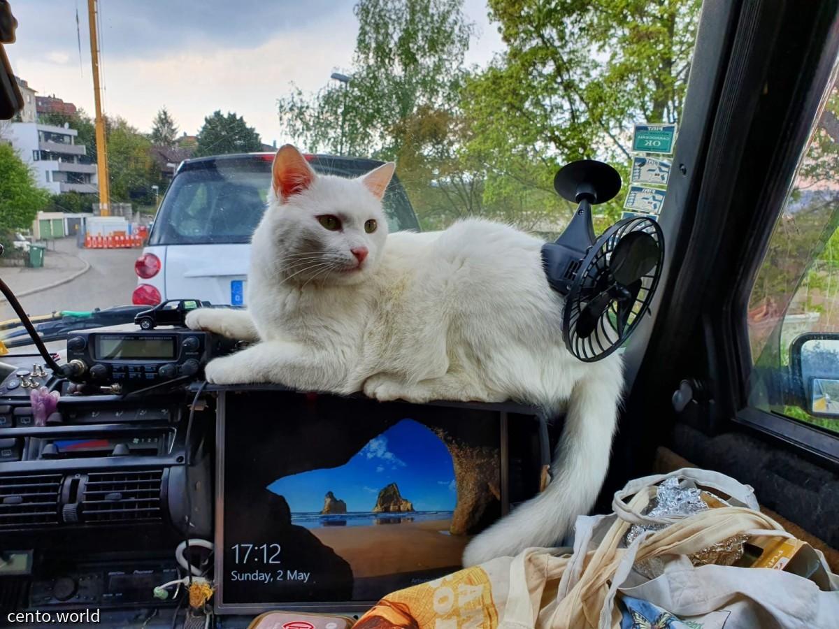 Beifahrer Didi